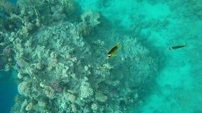 Peixes do coral do movimento lento video estoque