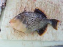 Peixes do disparador travados em Diego Garcia imagens de stock