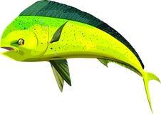 Peixes do golfinho ilustração stock