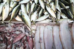 Peixes do mar diferentes na tabela Fotografia de Stock Royalty Free