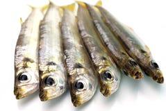 Peixes do mar frescos Fotos de Stock