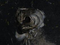 Peixes do osso Fotos de Stock