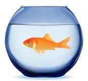 Peixes do ouro ilustração do vetor