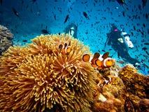Peixes do palhaço e mergulhadores falsos do mergulhador Fotos de Stock