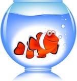 Peixes do palhaço no aquário Imagens de Stock Royalty Free