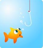 Peixes do peixe dourado que olham gancho estarrecente Imagens de Stock Royalty Free