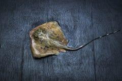 Peixes do raio de Sting fotos de stock