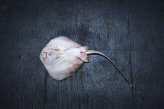 Peixes do raio de Sting fotografia de stock