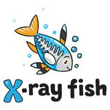 Peixes do raio X para ABC Alfabeto X Fotos de Stock