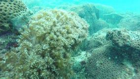 Peixes do recife de corais em um oceano video estoque