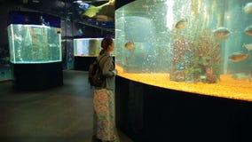 Peixes do relógio da mulher no oceanarium video estoque