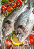 Peixes do sargo em uma grade Foto de Stock Royalty Free