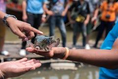 Peixes do soprador no mar, Tailândia imagens de stock royalty free