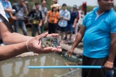 Peixes do soprador no mar, Tailândia fotos de stock royalty free