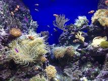peixes dos desenhos animados com a criatura do mar no mesmo tanque Imagens de Stock Royalty Free