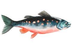 Peixes dos salmões da aquarela ilustração royalty free