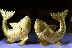 Peixes dourados Imagem de Stock