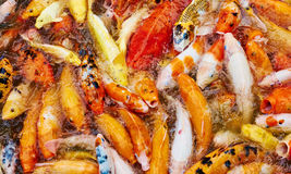 Peixes dourados Fotos de Stock Royalty Free