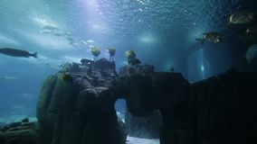 Peixes e anfíbios variados em um aquário gigante para o entretenimento aos turistas vídeos de arquivo