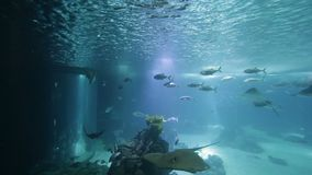 Peixes e anfíbios variados em um aquário gigante para o entretenimento aos turistas video estoque