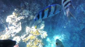 Peixes e coral Foto de Stock