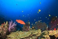 Peixes e coral Imagens de Stock