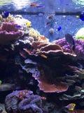 Peixes e coral Fotografia de Stock Royalty Free