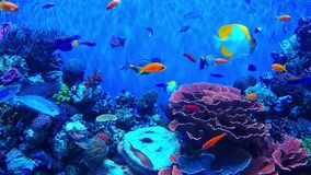 Peixes e coral do recife video estoque