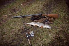 Peixes e pato Fotos de Stock