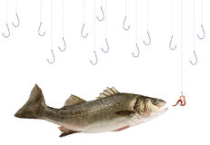 Peixes e pesca Imagem de Stock Royalty Free