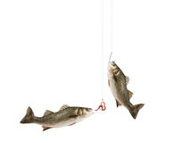 Peixes e pesca Foto de Stock