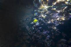 Peixes e plantas da vida marinha imagem de stock