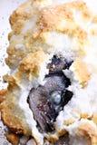 Peixes e sal Imagens de Stock