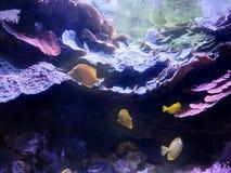 Peixes e seu habitat imagens de stock royalty free