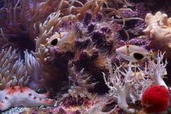 Peixes e starfish tropicais imagem de stock