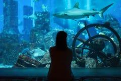 Peixes e tubarões do relógio da jovem mulher no aquário azul bonito em Dubai fotografia de stock royalty free