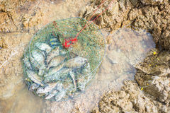 Peixes em redes de pesca Imagens de Stock