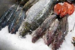 Peixes em um mercado Imagens de Stock Royalty Free