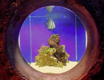 Peixes em um tanque imagem de stock royalty free