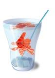 Peixes em um vidro. Imagens de Stock Royalty Free