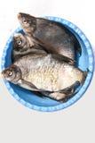 Peixes em uma bacia Imagem de Stock Royalty Free
