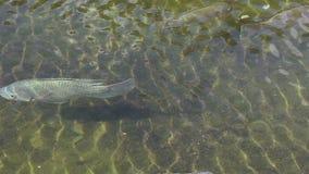 Peixes em uma lagoa filme