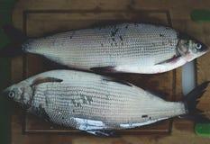 2 peixes em uma placa de madeira imagem de stock royalty free