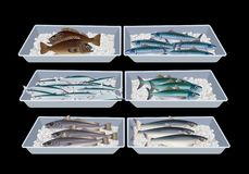 Peixes em umas caixas do recipiente ilustração royalty free