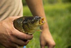 Peixes enganchados em uma mão masculina com Fotografia de Stock Royalty Free