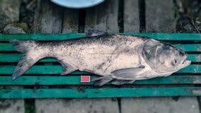 Peixes enormes que foram travados e postos perto de alguns fósforos Imagem de Stock