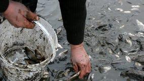 Peixes envenenados