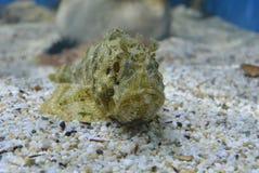 Peixes estranhos Imagem de Stock