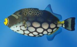 Peixes exóticos Imagem de Stock Royalty Free