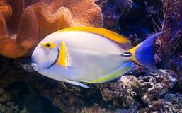 Peixes exóticos Imagem de Stock